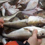 Žuvų kvotų aukcionas - balandžio pabaigoje