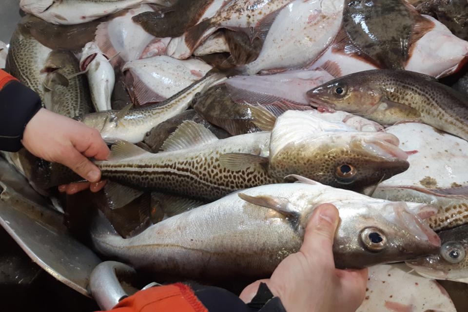 Žuvų kvotų aukcionas – balandžio pabaigoje