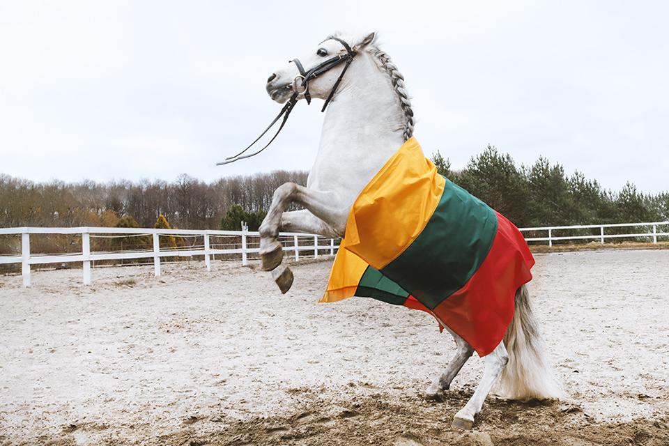 Konkursas sulaukė susidomėjimo iš pasaulio lietuvių