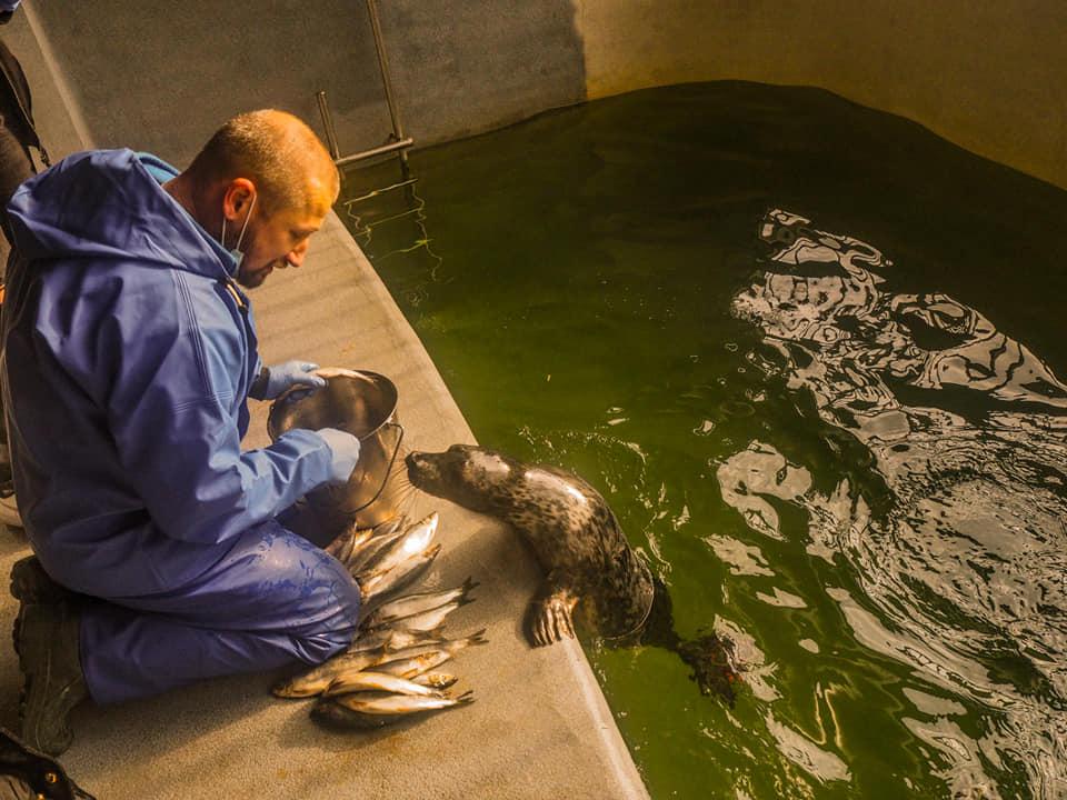 В Морском музее показали окрепших тюленят, спасенных этой весной