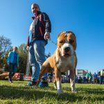 Pasaulinės gyvūnų dienos šventė Gargžduose: tikimasi rekordinės eisenos