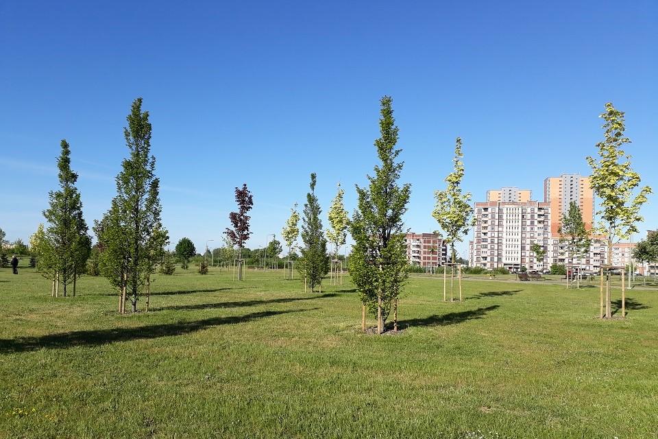 Klaipėdoje – daugiau naujų medžių?