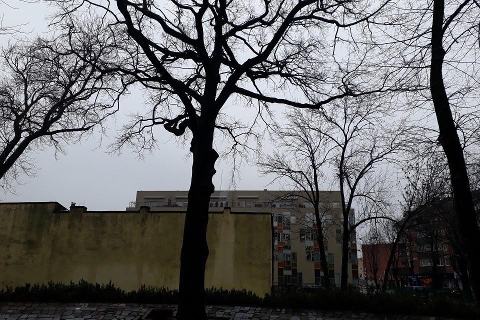Mokslininkai: daug triukšmo ir blogai nugenėti medžiai