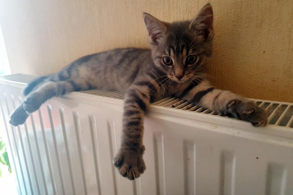 Šildymo sezonui artėjant į pabaigą – dar pigesnė šiluma