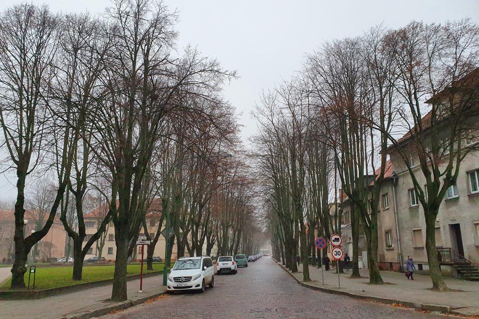 Vilties ir S. Nėries gatvių medžiai: galima ir nekirsti