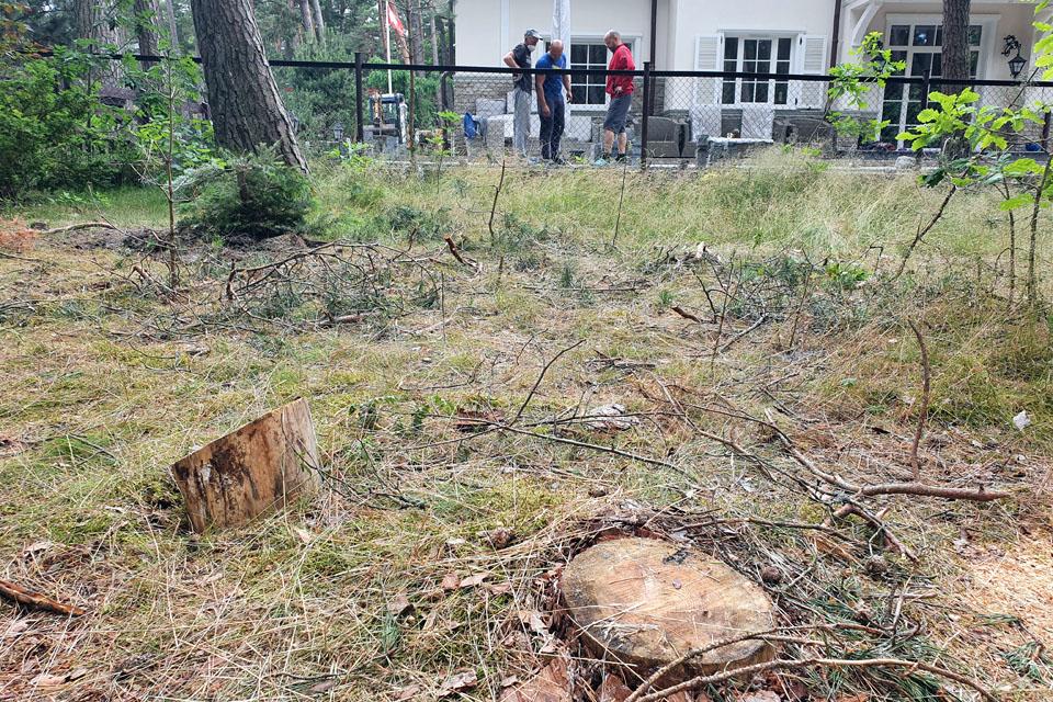 Medžiai Girulių miške iškirsti legaliai