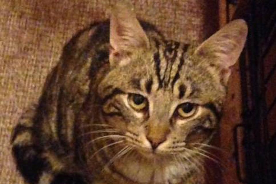 Oliveris su užburiančiomis gintarinėmis akimis