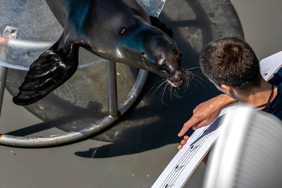 Supažindins ir su delfinais, ir su jūrų liūtais