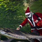 Jūrų muziejuje plaukioja Kalėdų Senelis, veikia Kalėdinis paštas