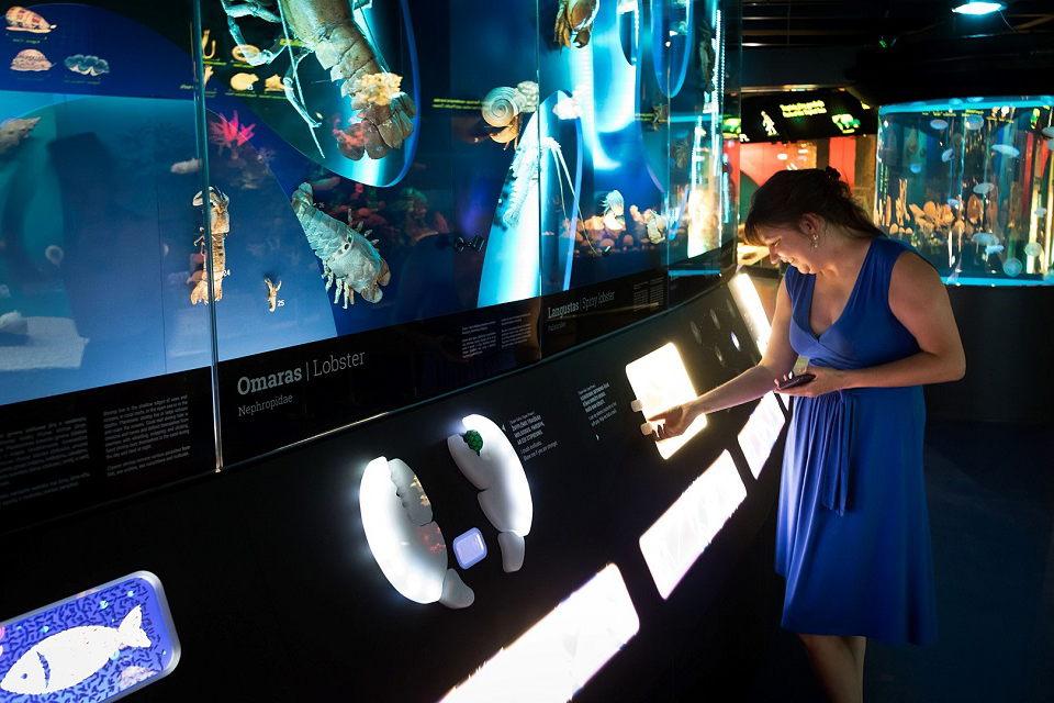 Susipažinti su nauja Jūrų muziejaus ekspozicija – ir galynėjantis su gyvūnais