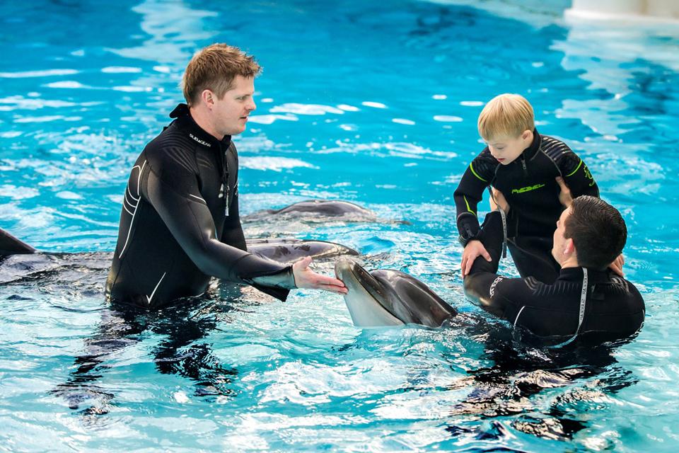 Delfinų terapijai – tarptautinis projektas