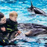Kviečia registruotis delfinų terapijai