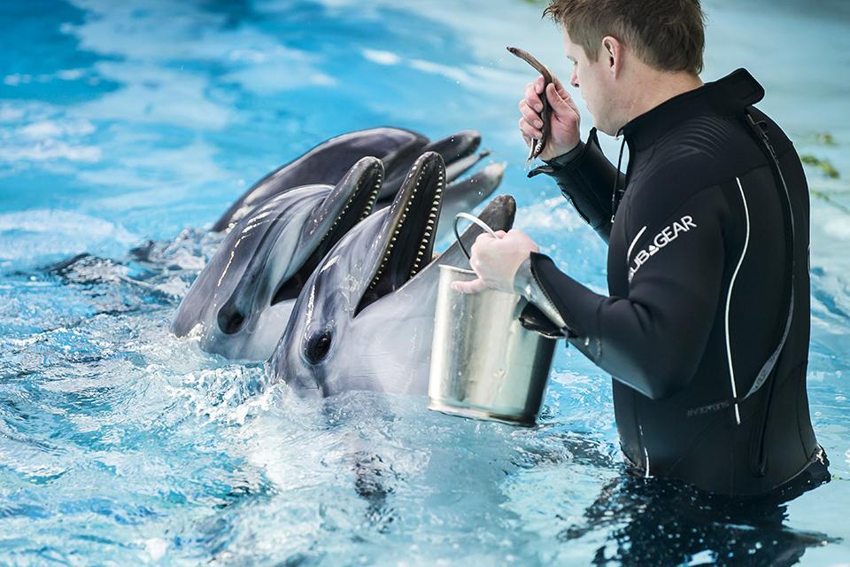 Šį ketvirtadienį eteryje – delfinų pietūs