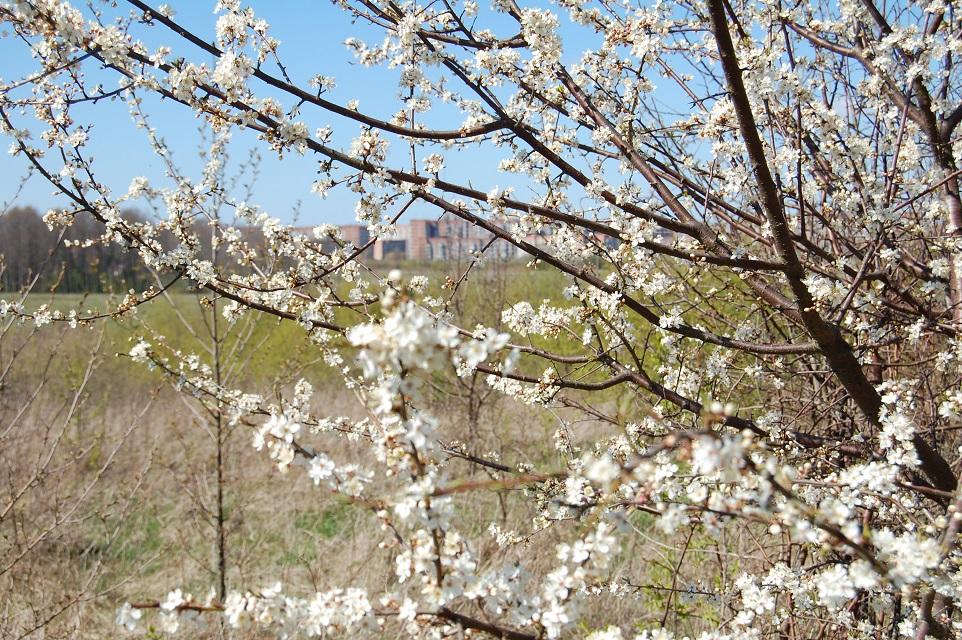 Į pajūrį ateina pavasaris
