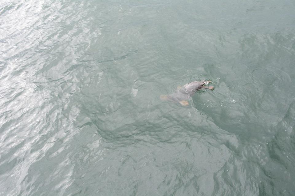 Į jūrą paleido dar 5 ruoniukus
