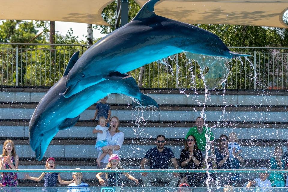 Atnaujins delfinų bei jūrų liūtų pasirodymus