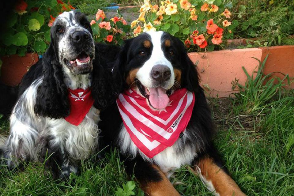 Kelionės po parodas – su šunimis