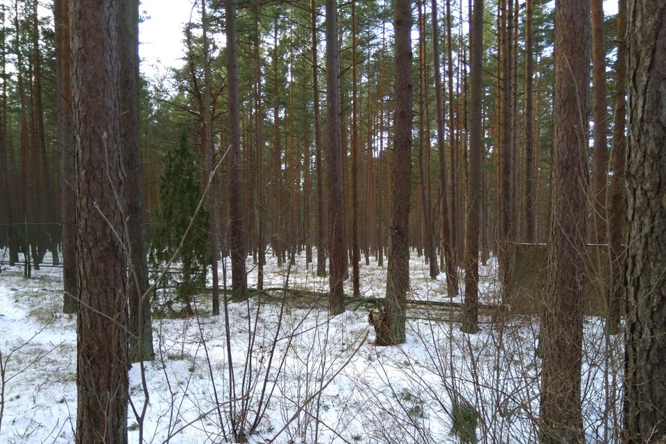Sovietinė tvora miške liks, bet bus praėjimų