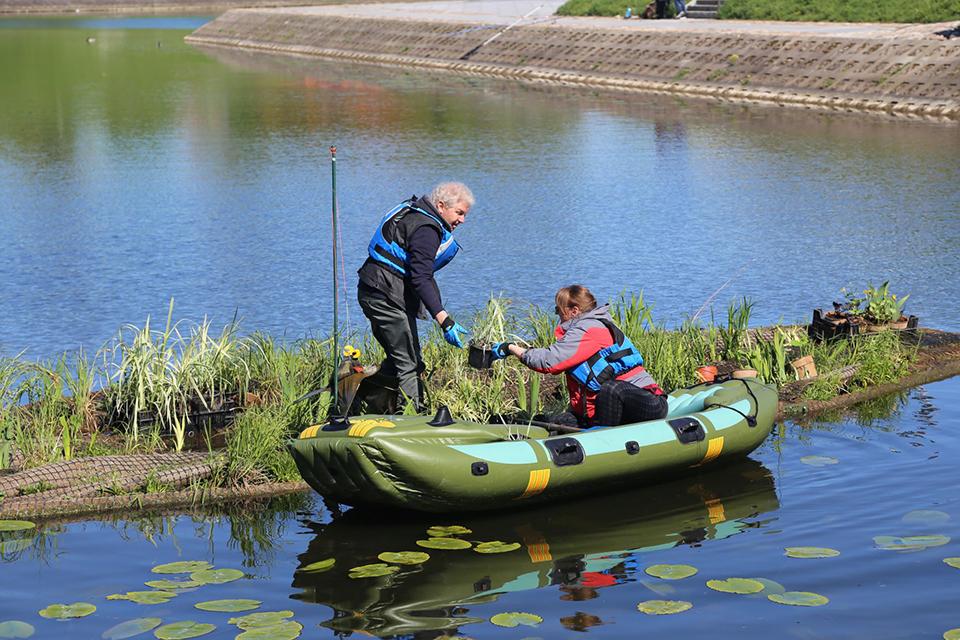 Klaipėdos universiteto mokslininkų kuriamos salos ir valo vandenį, ir puošia aplinką