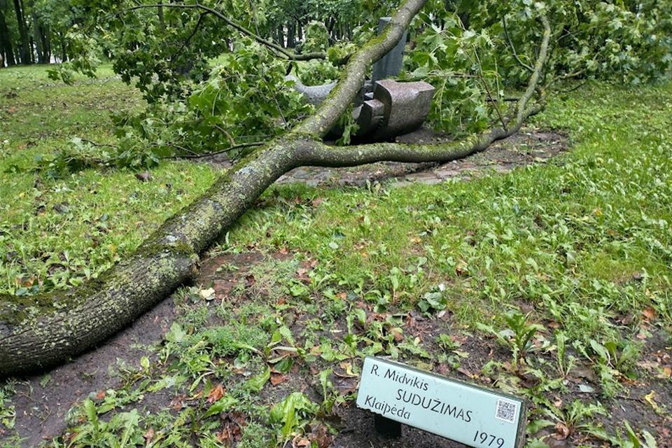 Audros Klaipėdoje aukos – keliasdešimt medžių