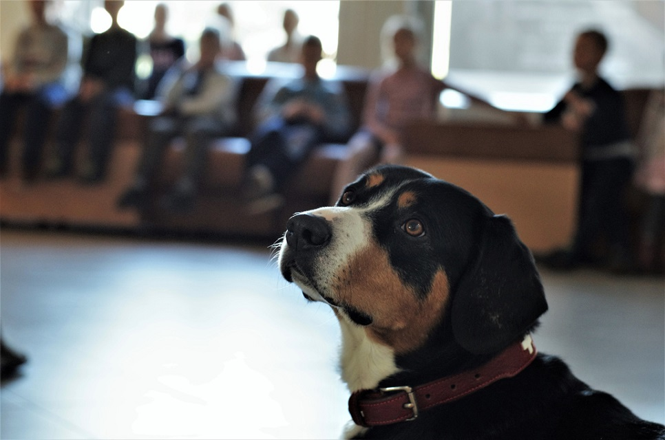 Kaip gyvūnai gali padėti sergantiems