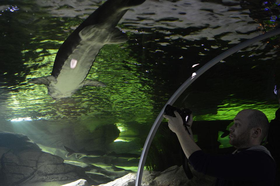Įspūdingai atnaujino akvariumus