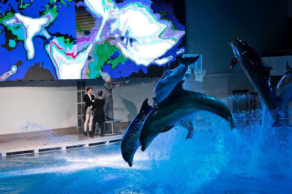 """""""Sniego karalienėje"""" vaidins ir delfinai, ir jūrų liūtai"""