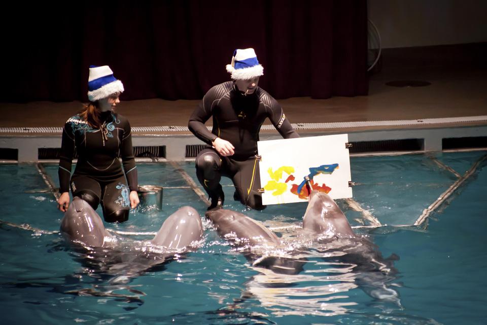 Vėl rengs kalėdinius delfinų pasirodymus