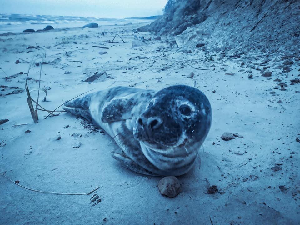 Неподалеку от обрыва «Шапка голландца» нашли серого тюлененка: животное нуждалось в помощи