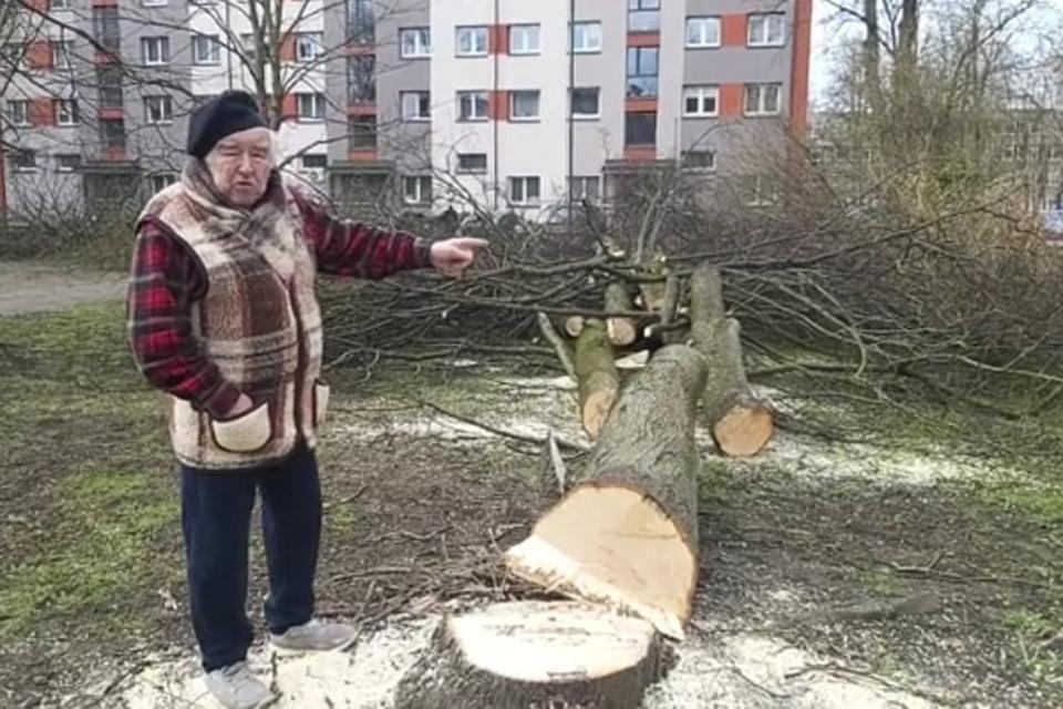 Savivaldybė: dauguma protestuojančių dėl medžių negyvena Rumpiškės kvartale