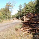 Savavališkai iškirto mišką