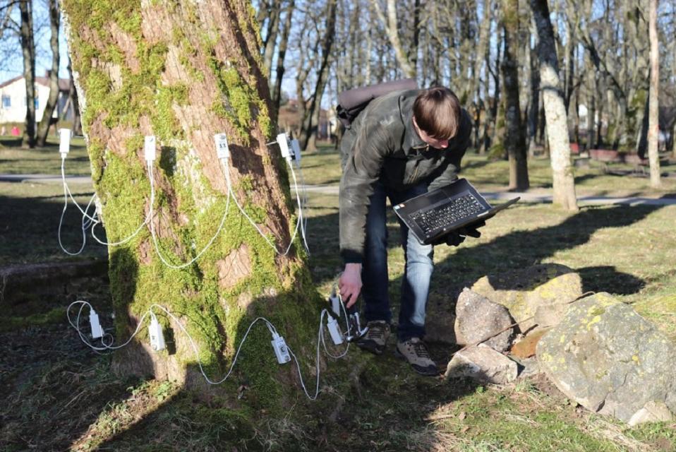 Gargždų parkas: 48 medžiai – blogos būklės