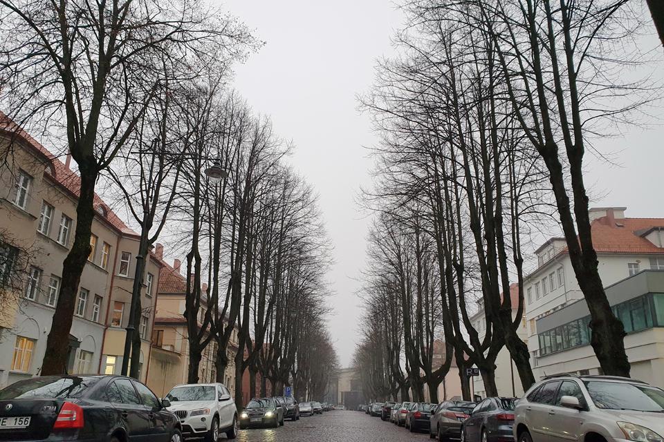 Klaipėdoje masiškai virs medžiai: siūloma nupjauti net ir sveikas liepas