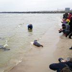 Kur nekeliavo į jūrą paleisti ruoniai?
