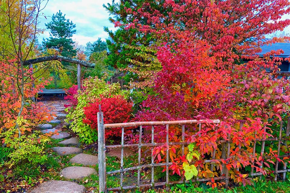 Japoniškame sode – spalvingiausias metų laikas