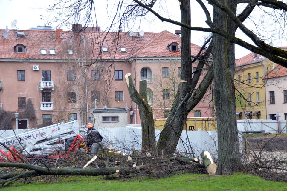 Medžių galas suplanuotas dar prieš 15 metų