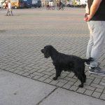 Pavogė šunį ir 300 eurų