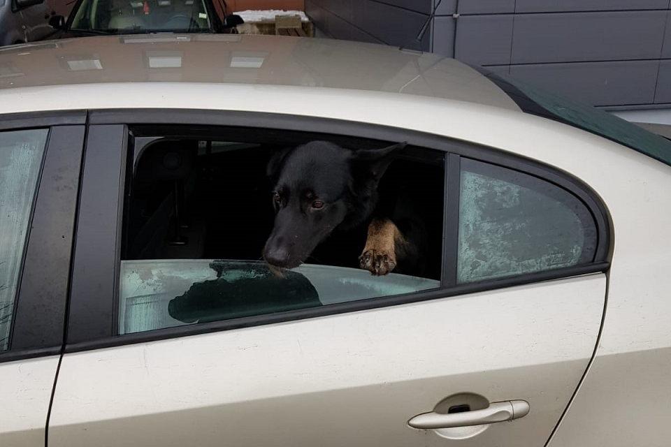 Pareigūnai surado pavogtą šunį